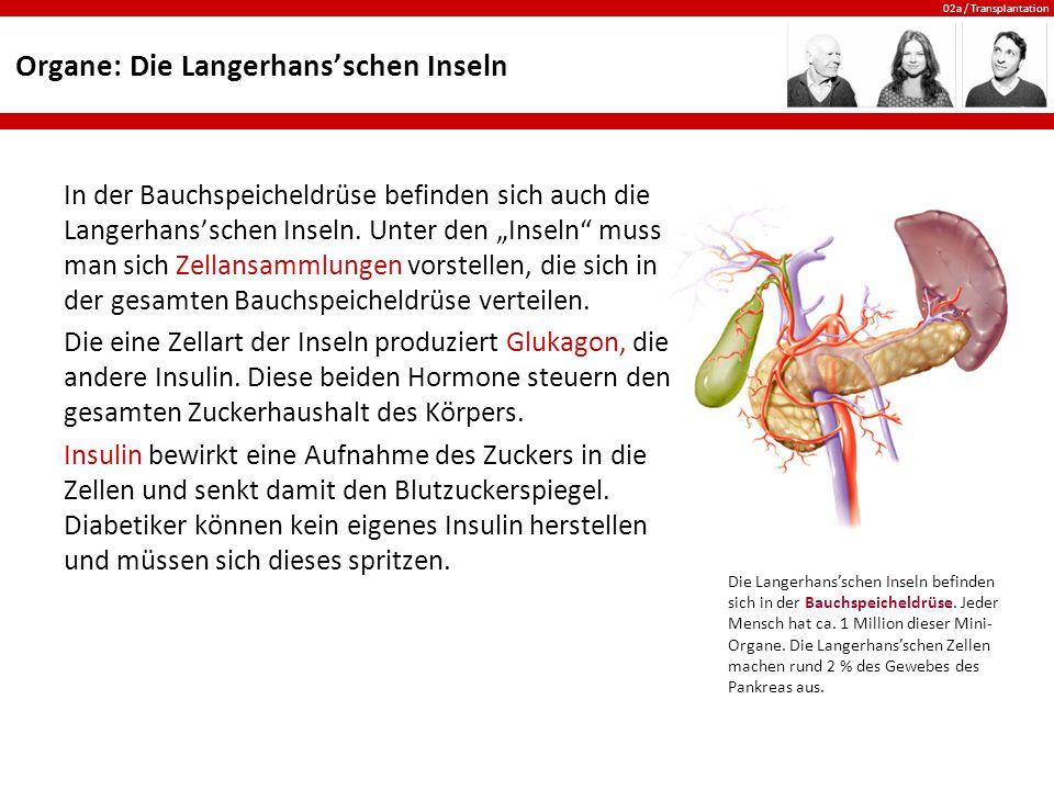 Organe: Die Langerhans'schen Inseln