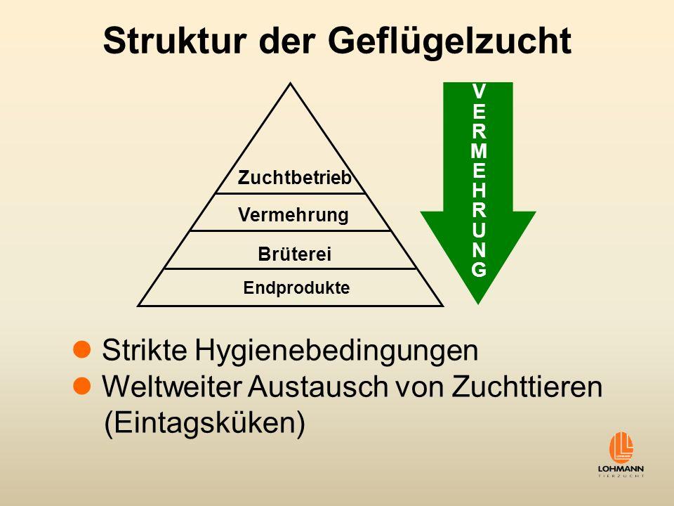Struktur der Geflügelzucht