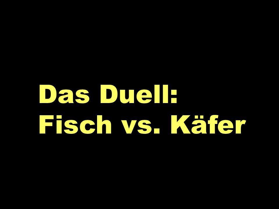 Das Duell Das Duell: Fisch vs. Käfer