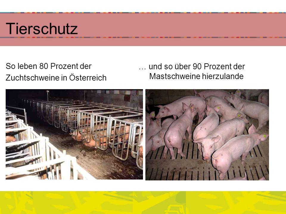Tierschutz So leben 80 Prozent der