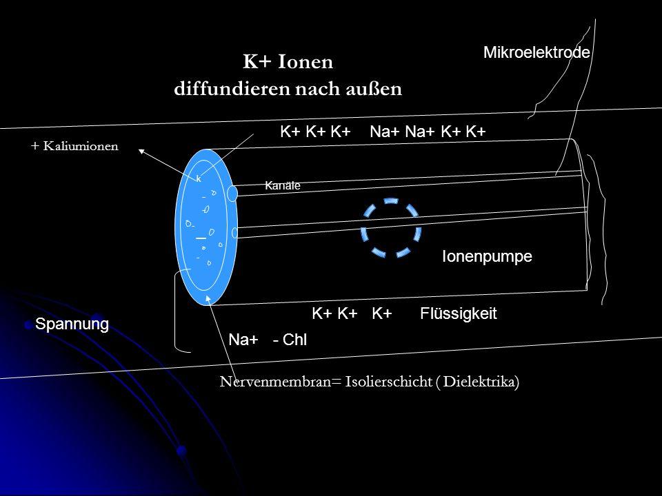 K+ Ionen diffundieren nach außen