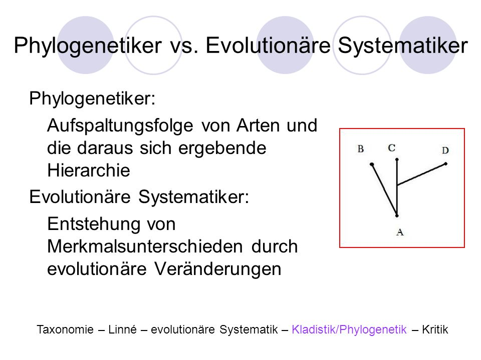 Phylogenetiker vs. Evolutionäre Systematiker