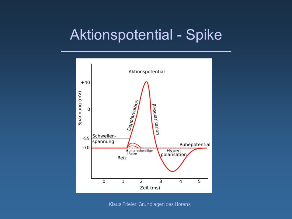 Aktionspotential - Spike