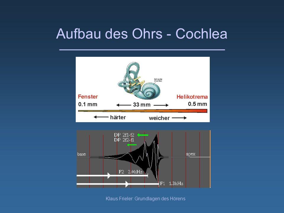 Aufbau des Ohrs - Cochlea