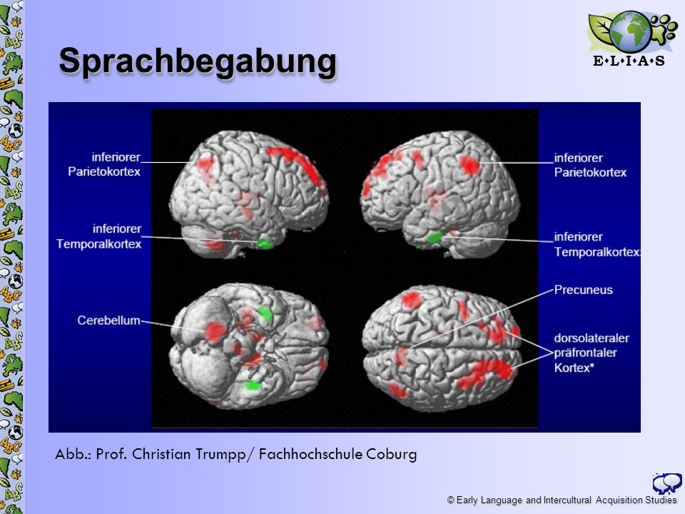 Sprachbegabung Abb.: Prof. Christian Trumpp/ Fachhochschule Coburg