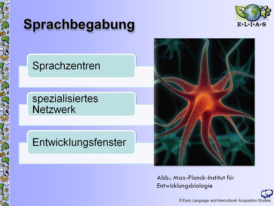 Sprachbegabung Abb.: Max-Planck-Institut für Entwicklungsbiologie
