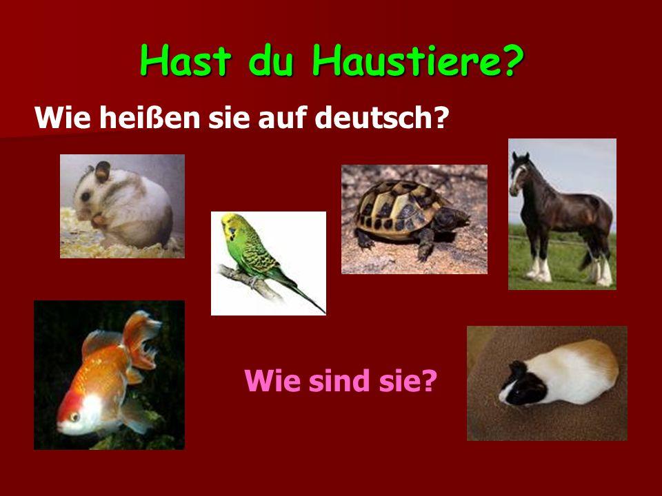 Hast du Haustiere Wie heißen sie auf deutsch Wie sind sie