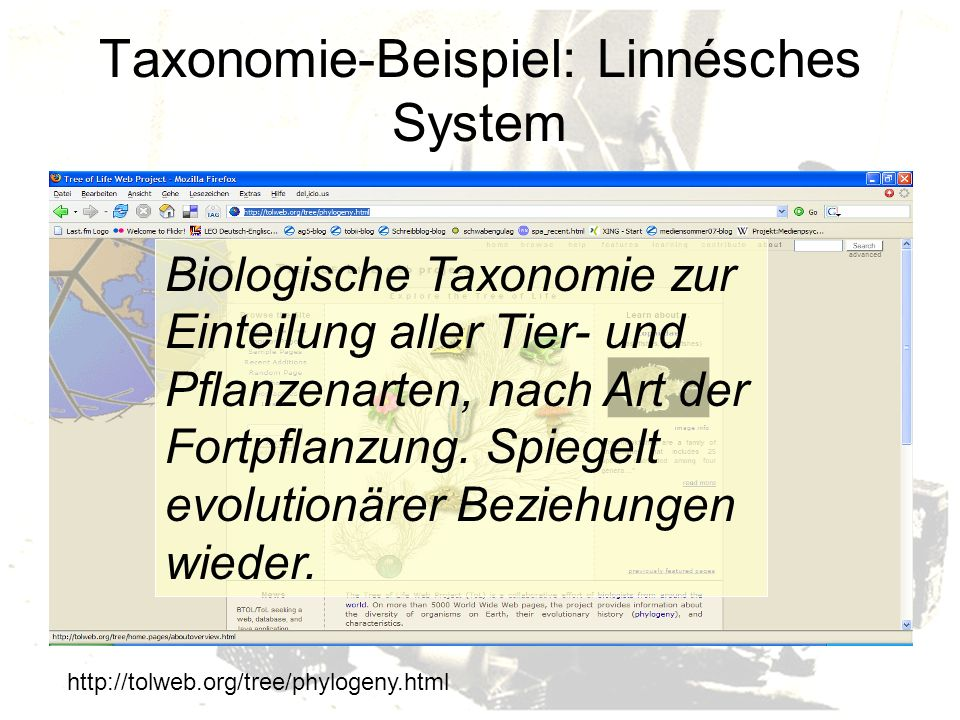Taxonomie-Beispiel: Linnésches System