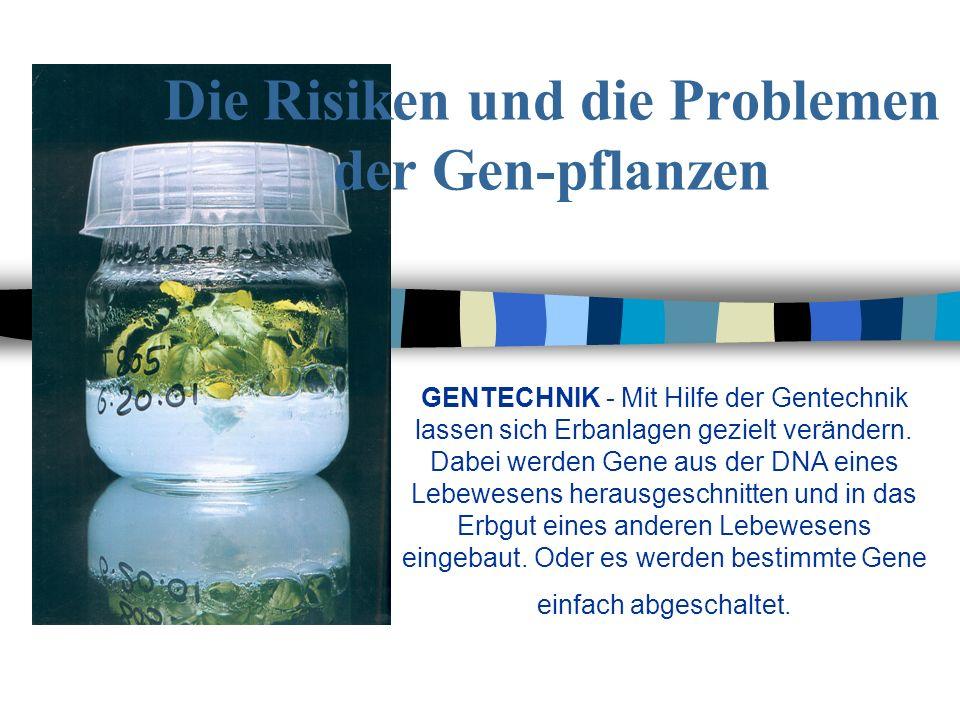 Die Risiken und die Problemen der Gen-pflanzen