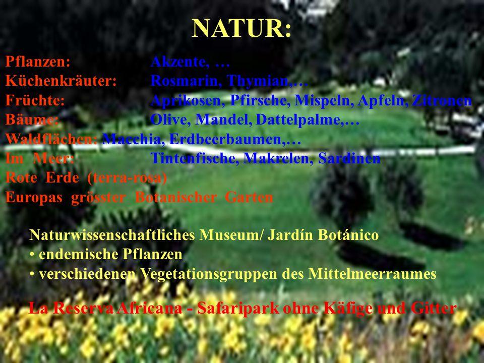NATUR: Pflanzen: Akzente, … Küchenkräuter: Rosmarin, Thymian,…