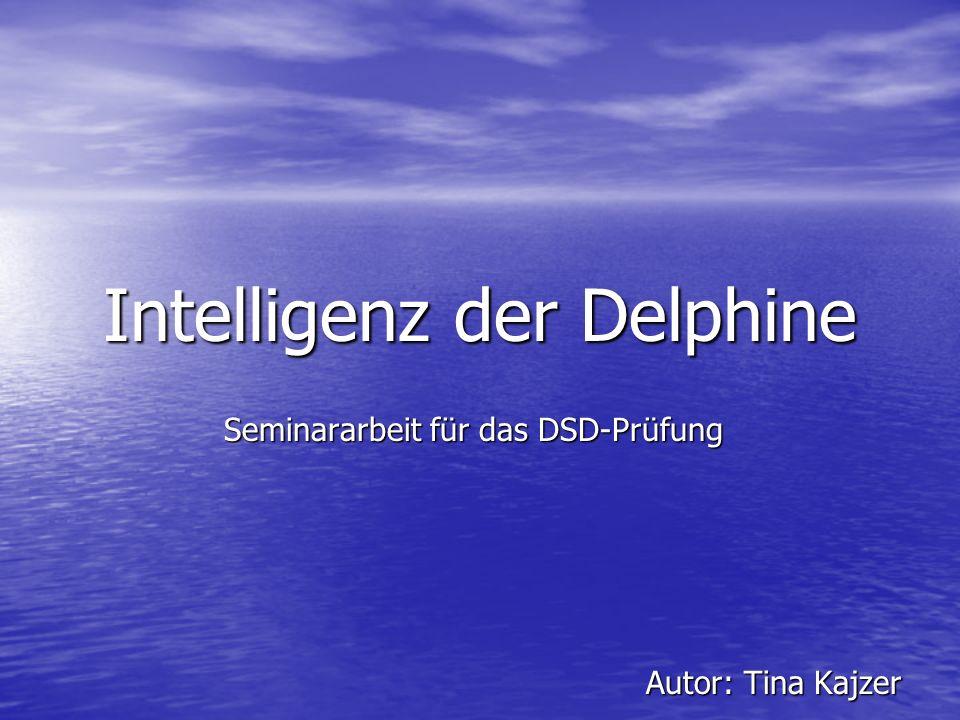 Intelligenz der Delphine