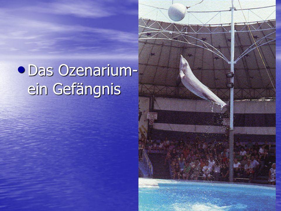 Das Ozenarium- ein Gefängnis