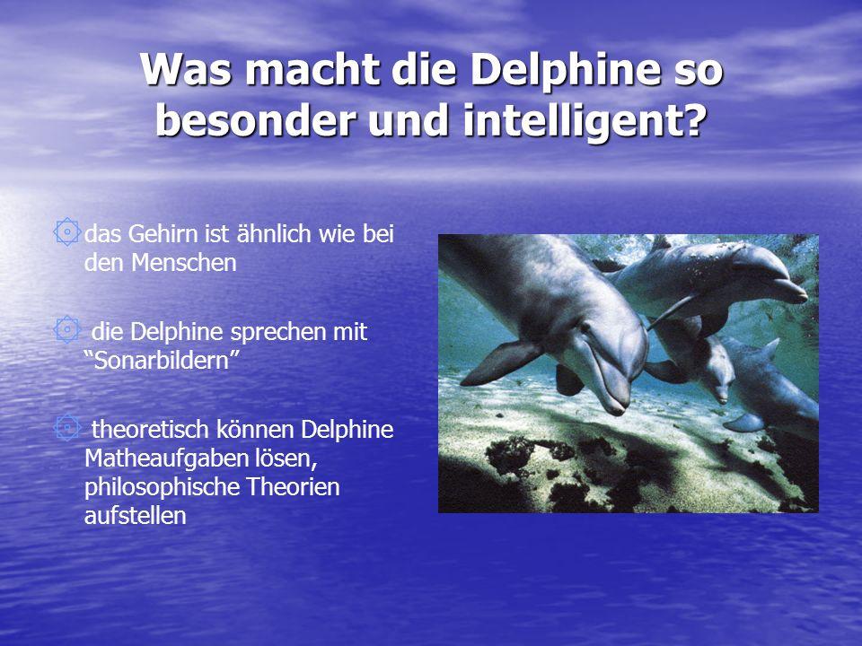 Was macht die Delphine so besonder und intelligent