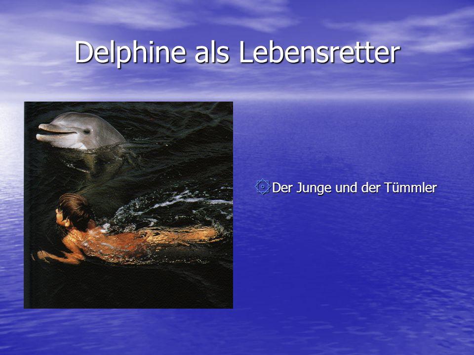 Delphine als Lebensretter