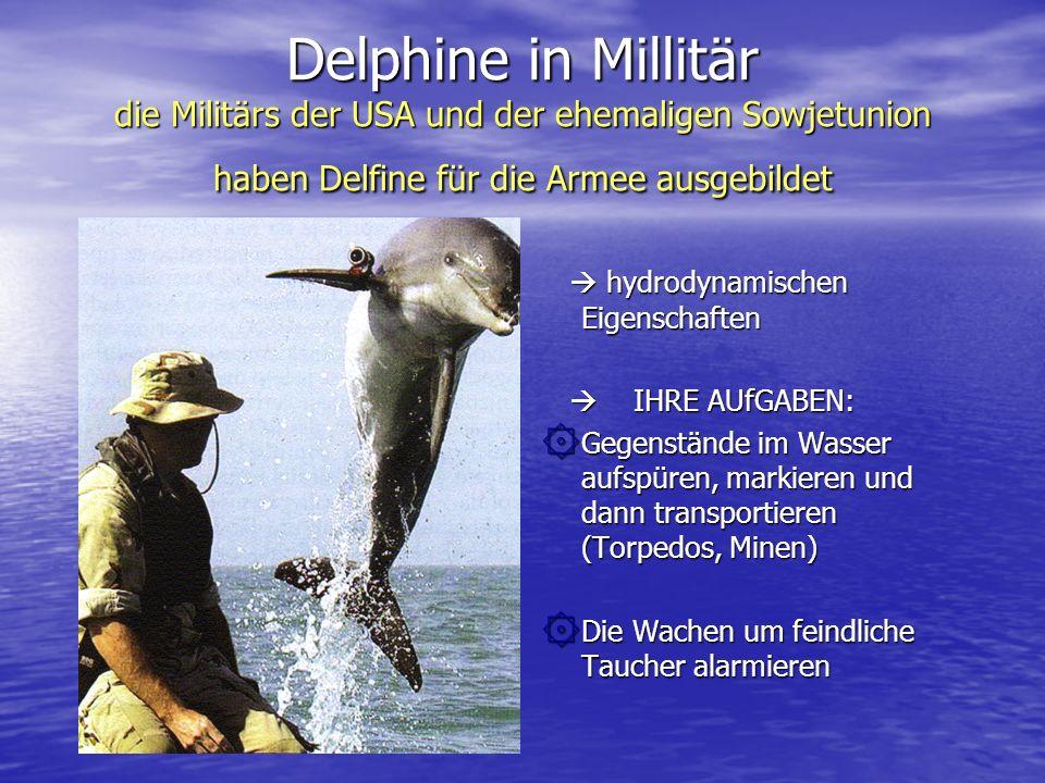 Delphine in Millitär die Militärs der USA und der ehemaligen Sowjetunion haben Delfine für die Armee ausgebildet