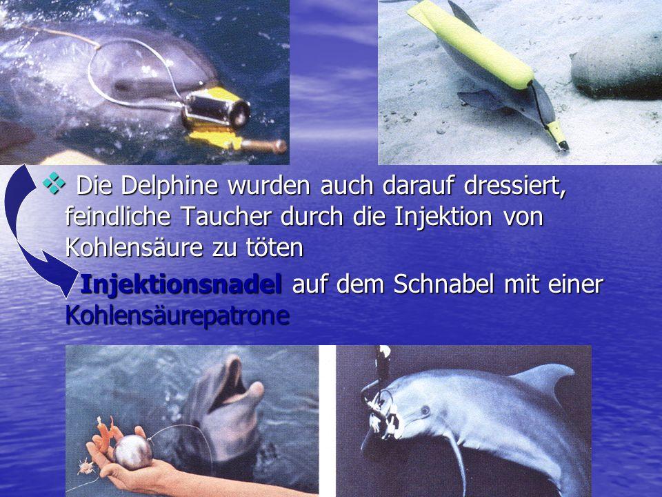 Die Delphine wurden auch darauf dressiert, feindliche Taucher durch die Injektion von Kohlensäure zu töten