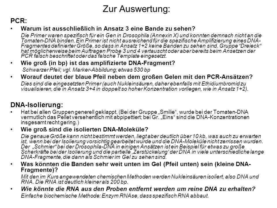 Zur Auswertung: PCR: DNA-Isolierung: