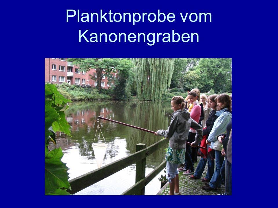 Planktonprobe vom Kanonengraben