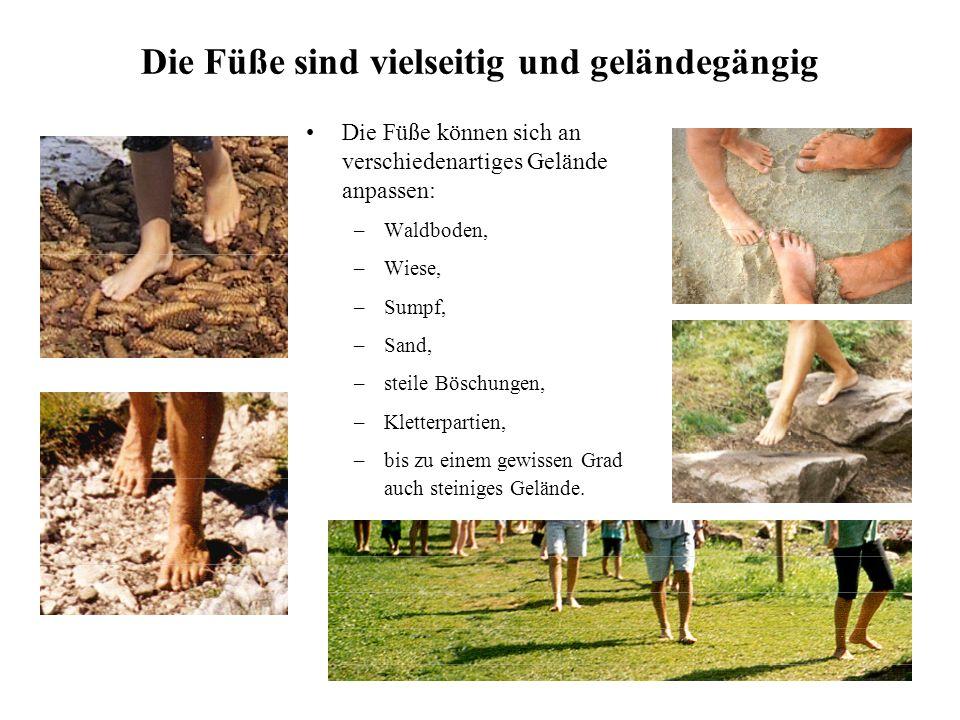 Die Füße sind vielseitig und geländegängig