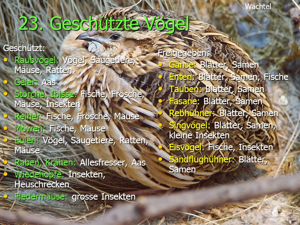 23. Geschützte Vögel Geschützt: