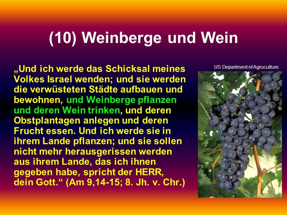 (10) Weinberge und Wein