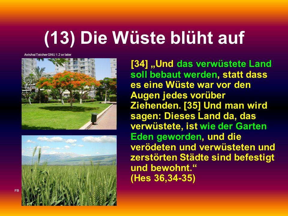 (13) Die Wüste blüht auf Avishai Teicher GNU 1.2 or later.