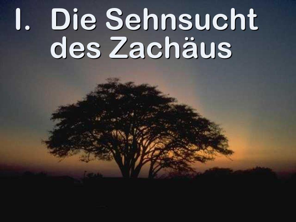 Die Sehnsucht des Zachäus