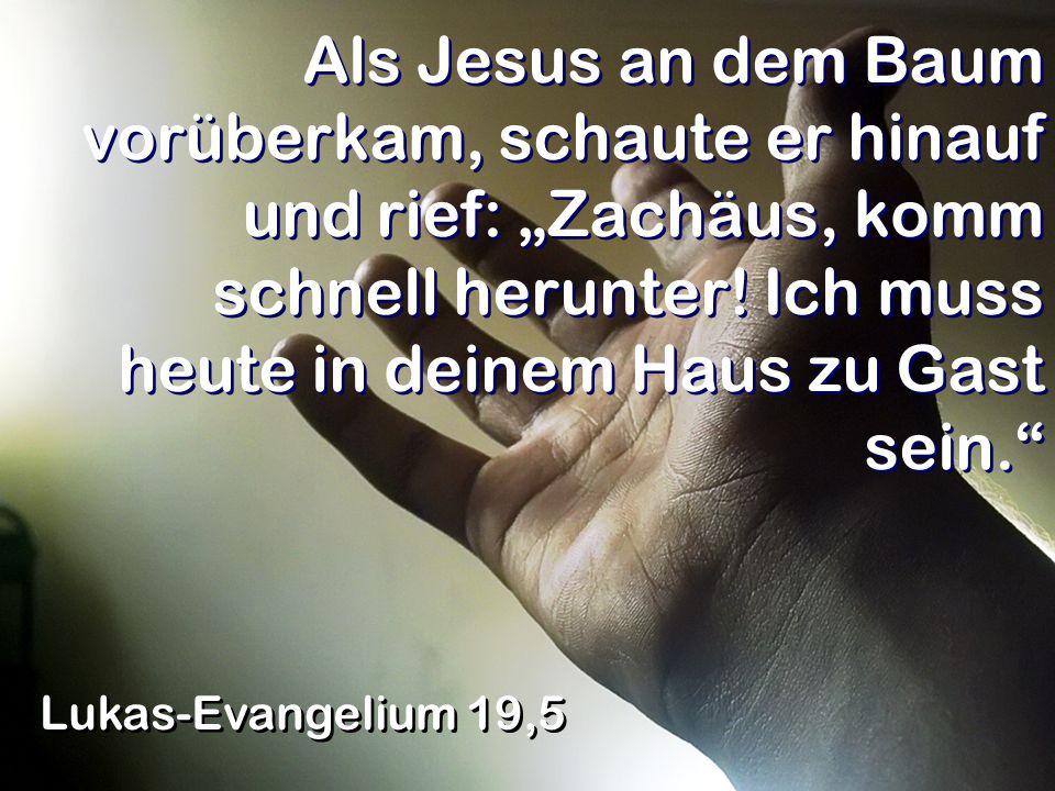 """Als Jesus an dem Baum vorüberkam, schaute er hinauf und rief: """"Zachäus, komm schnell herunter! Ich muss heute in deinem Haus zu Gast sein."""