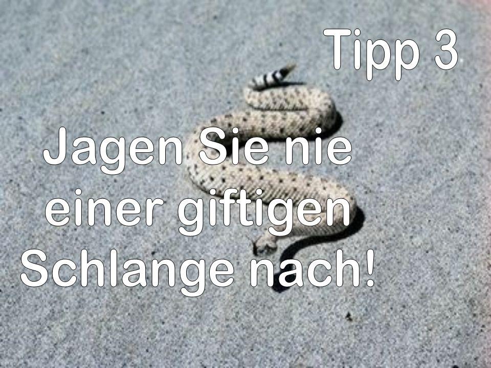 Tipp 3 Jagen Sie nie einer giftigen Schlange nach!