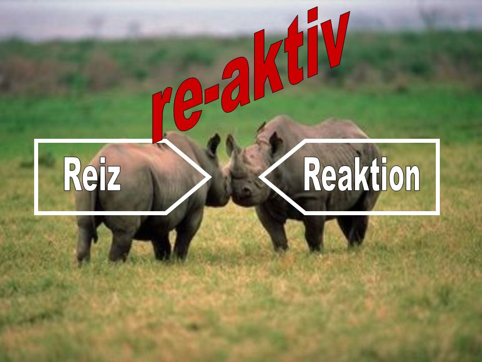 re-aktiv Reiz Reaktion