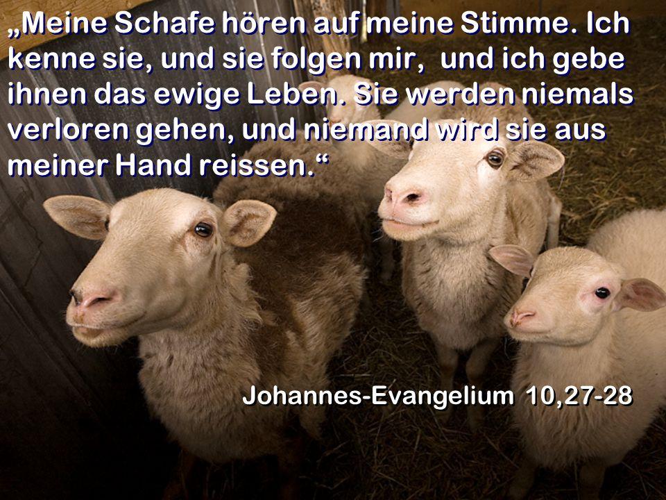 """""""Meine Schafe hören auf meine Stimme"""