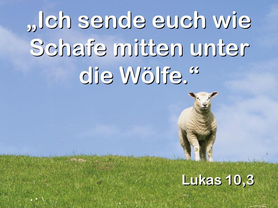 """""""Ich sende euch wie Schafe mitten unter die Wölfe."""