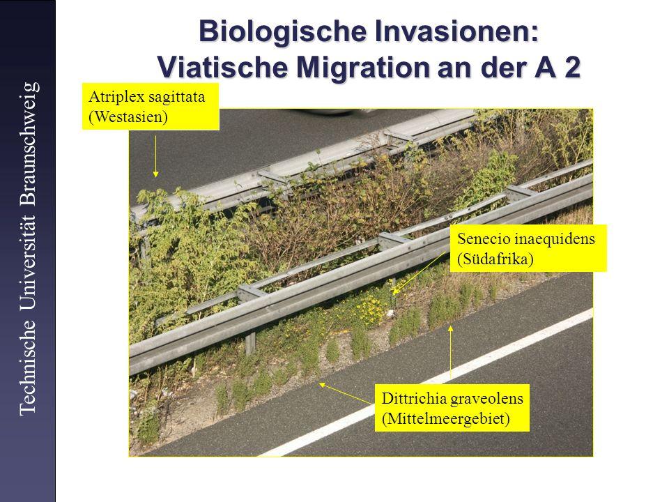 Biologische Invasionen: Viatische Migration an der A 2