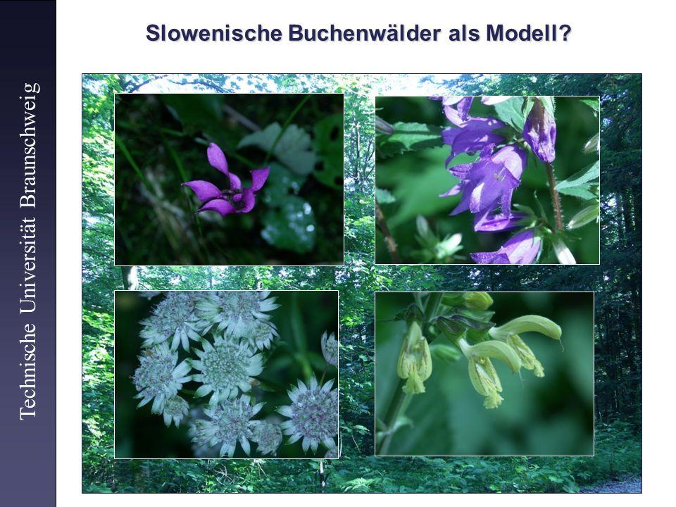 Slowenische Buchenwälder als Modell