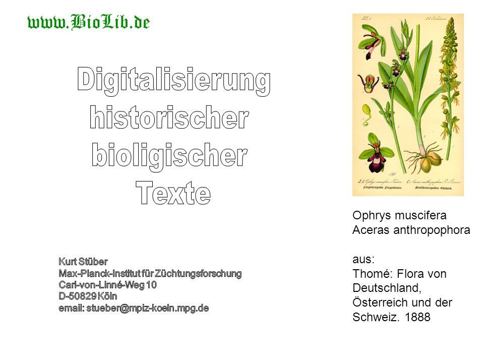 Digitalisierung historischer bioligischer Texte Ophrys muscifera