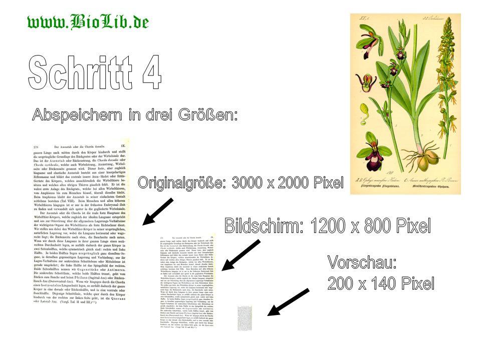 Schritt 4 Abspeichern in drei Größen: Originalgröße: 3000 x 2000 Pixel