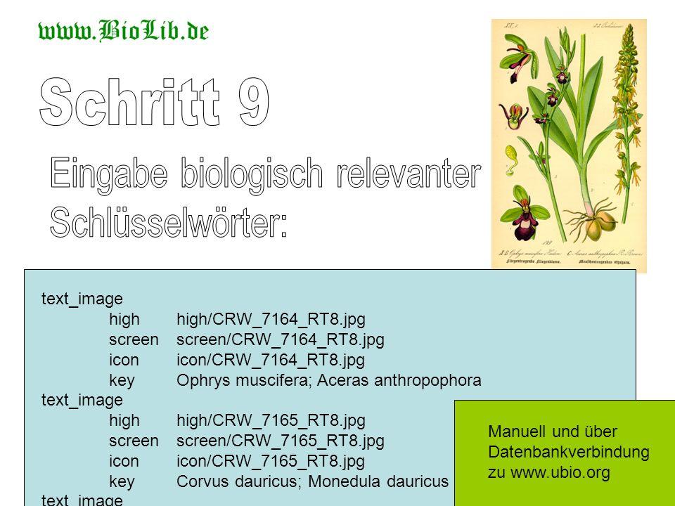 Schritt 9 Eingabe biologisch relevanter Schlüsselwörter: text_image