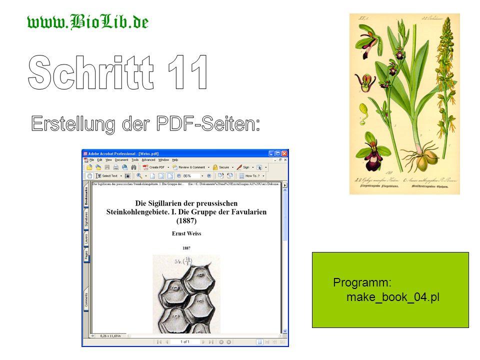Erstellung der PDF-Seiten: