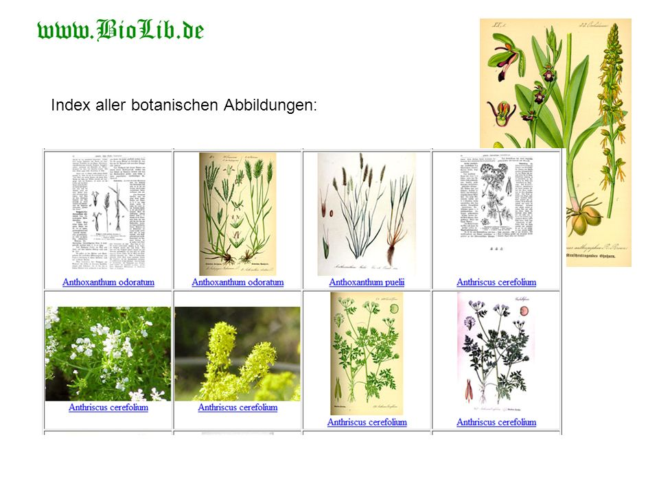 Index aller botanischen Abbildungen: