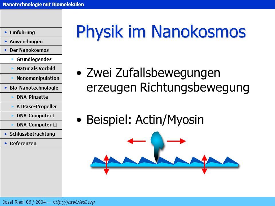 Physik im Nanokosmos Zwei Zufallsbewegungen erzeugen Richtungsbewegung