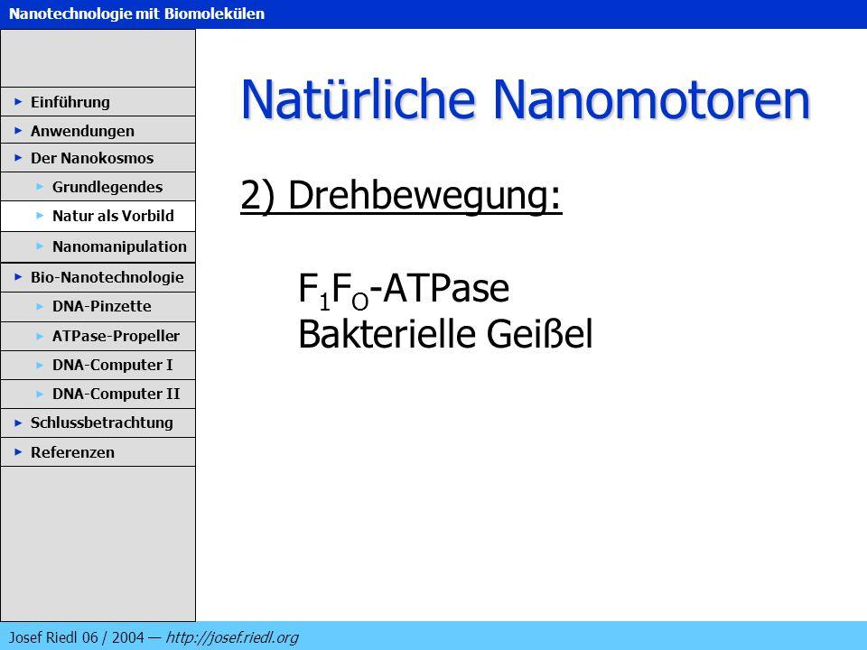 Natürliche Nanomotoren