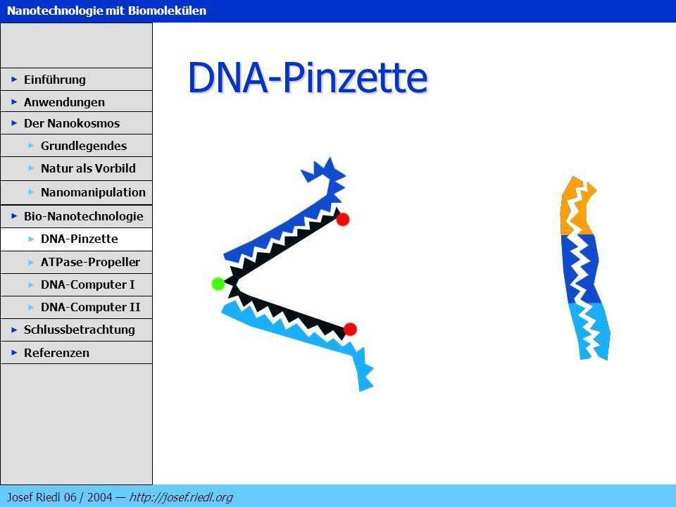DNA-Pinzette Einführung Anwendungen Der Nanokosmos Grundlegendes