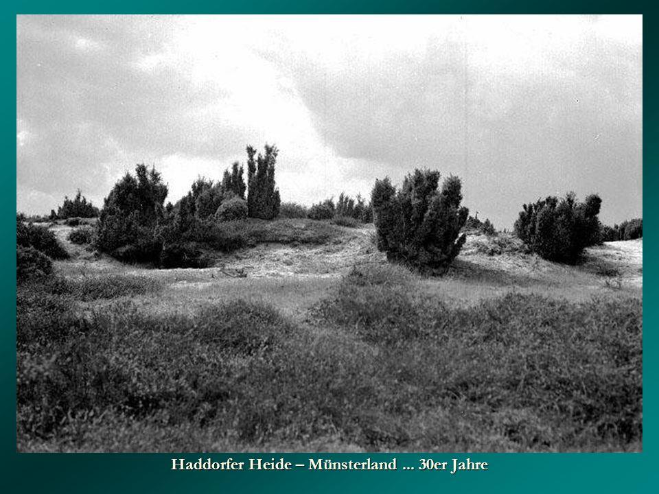Haddorfer Heide – Münsterland ... 30er Jahre