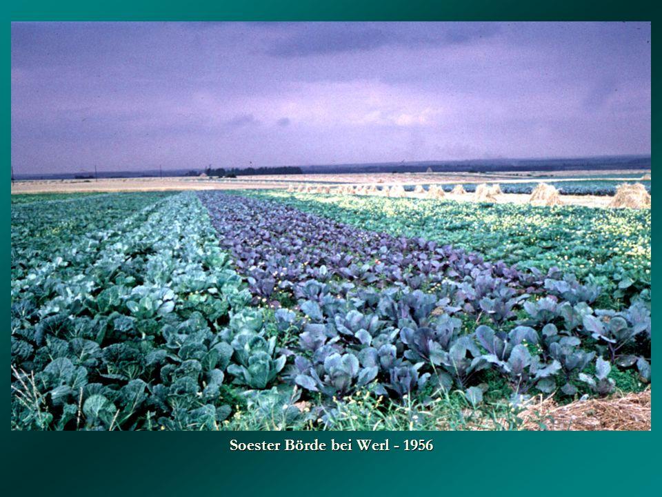 Soester Börde bei Werl - 1956