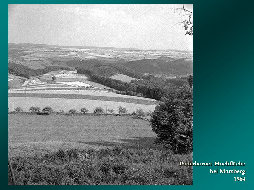 Paderborner Hochfläche bei Marsberg 1964