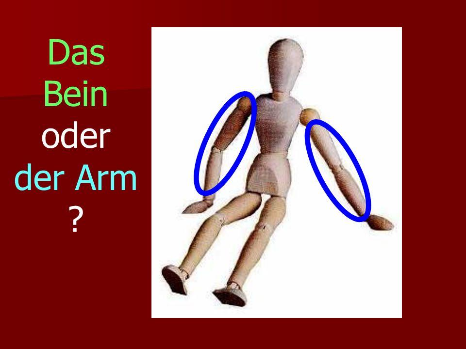 Das Bein oder der Arm