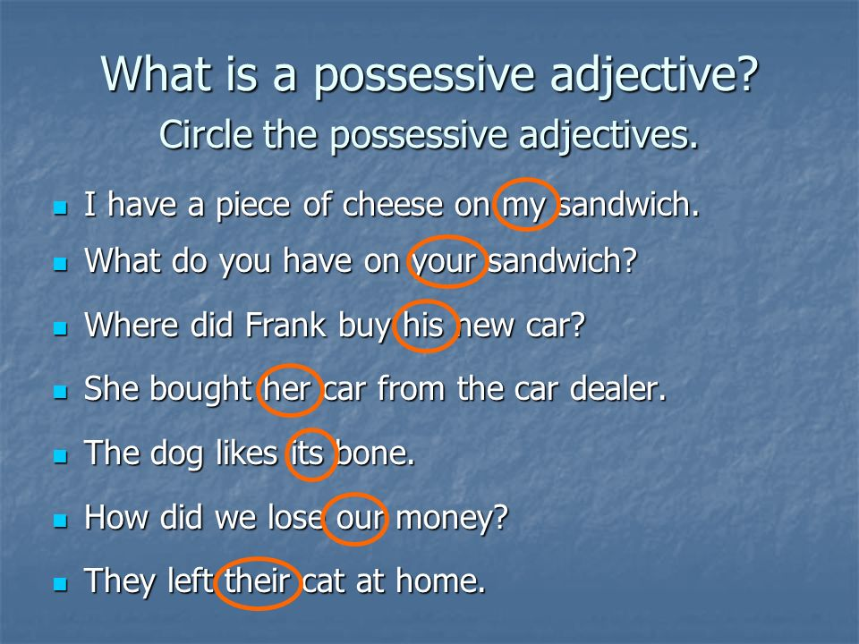 What is a possessive adjective Circle the possessive adjectives.