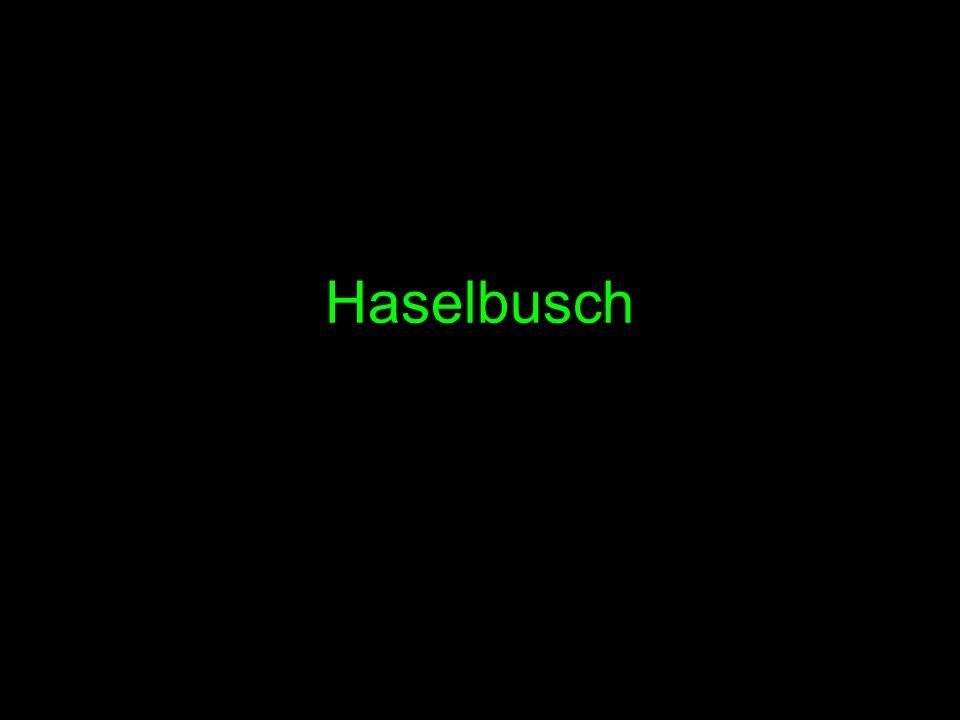 Haselbusch
