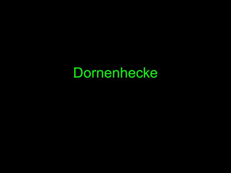 Dornenhecke