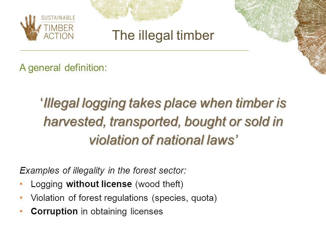 'Illegal logging takes place when timber is